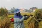 Nắng nóng gay gắt ảnh hưởng lớn đến sản xuất nông nghiệp