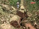 VKSND Tối cao lên tiếng vụ phá trắng rừng ở Khánh Hòa