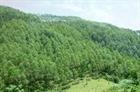 Quảng Nam: Thiếu đồng bộ trong công tác bảo vệ rừng