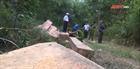 Lâm tặc mở đường vào rừng già đốn gỗ