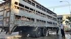 Vĩnh Long: Siết chặt khâu vận chuyển lợn trên địa bàn