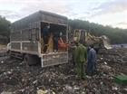 Quảng Ninh: Tiêu hủy hơn 46 nghìn con gà giống nhập lậu