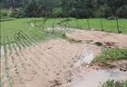 Yên Bái: Tiếp tục xuất hiện mưa đá gây thiệt hại lớn