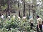 Quảng Bình chủ động phòng cháy, chữa cháy rừng