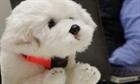 Đai đeo cổ thông minh nhận biết cảm xúc của vật nuôi