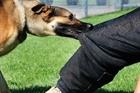 Hiểm nguy chó dữ tấn công người