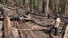 Đi cả xe máy kéo, công nông vào đất lâm trường phá rừng