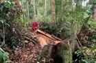Báo động tình trạng phá rừng vùng giáp ranh ở Huế