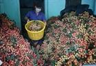Tháo gỡ khó khăn tiêu thụ nông sản cho Bắc Giang
