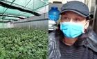 Thuê đất, dựng nhà kính trồng cần sa bán kiếm lời