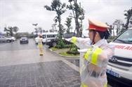 Bông hồng thép  phục vụ APEC 2017